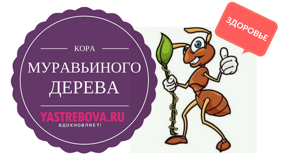 kora_muravinogo_dereva
